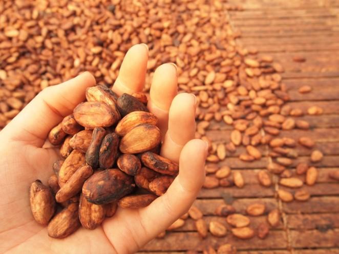 発酵後に天日干しで乾燥させたカカオ豆