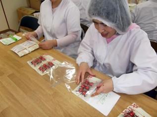 「てんとう虫チョコ」の包装作業をしている陸前高田市の就労支援施設「あすなろホーム」のみなさん