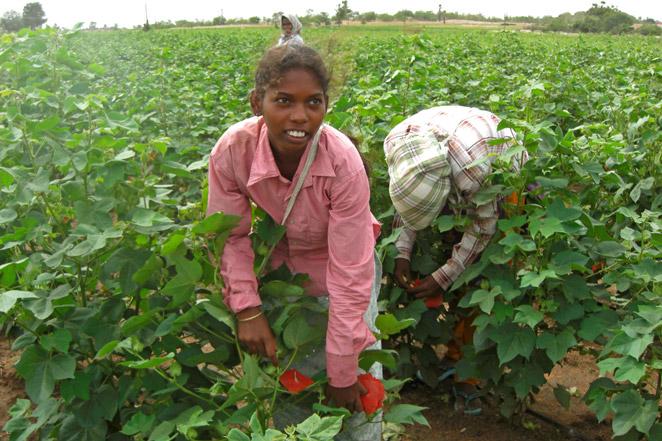 学校を中退してコットン栽培で働くインドの女の子