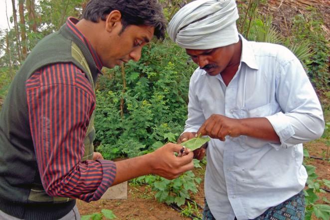 農業の技術訓練の様子