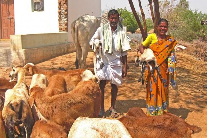 ヤギや牛を飼うようになったデヴァンナさん(左)とパドママさん(右)