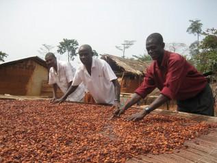 発酵させたカカオ豆を広げて、天日干しで乾燥させている様子