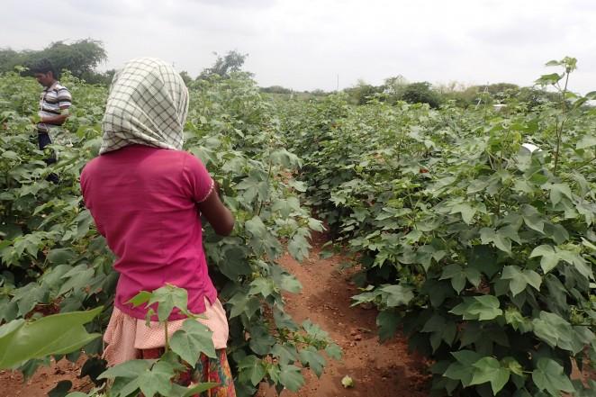 村で働く子ども