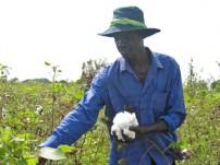ウガンダのコットン畑で働く男性