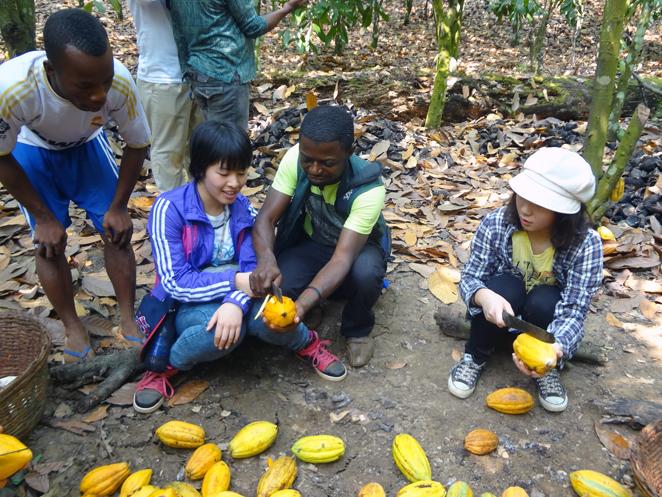 カカオ農園でカカオの収穫作業を体験させてもらいました
