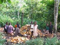 ガーナのカカオ生産地での支援活動