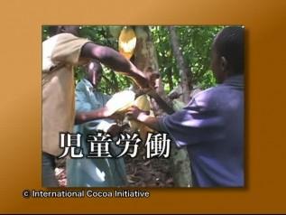 DVD「おいしいチョコレートの真実」チャプター3「児童労働の背景」貿易の仕組み、世界で作られる換金作物