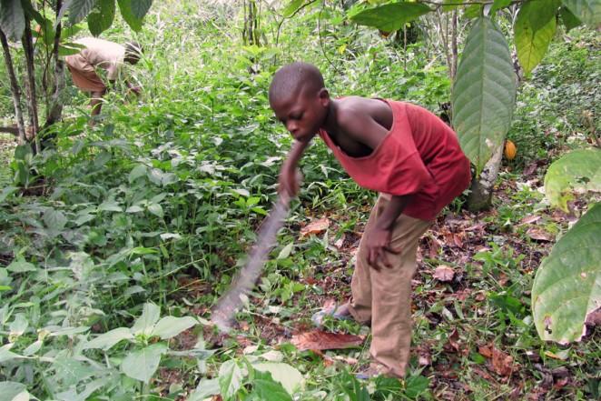 ガーナ・カカオ農園での児童労働